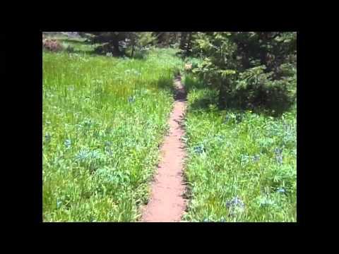 Bighorn Mountain Trail Run 50