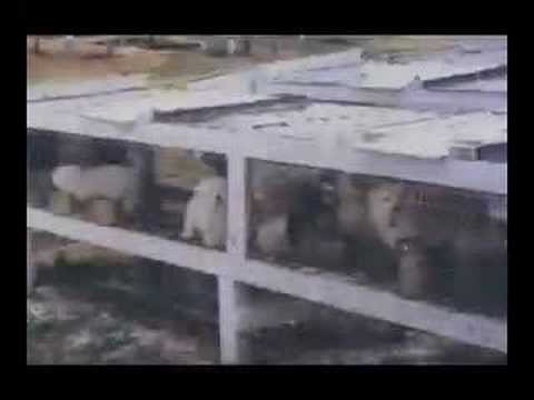 Animal Welfare Act - Puppymills