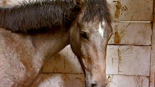 Das Gestüt Part 1/4 (Dokumentation deutsch, Doku Pferde, in voller Länge, Tierdokumentation)