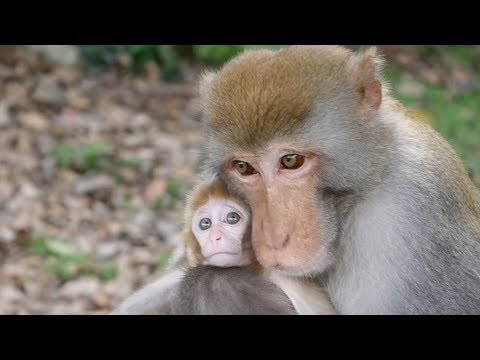 The most loving father monkey