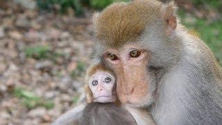 Mama takes Baty Papa takes baby