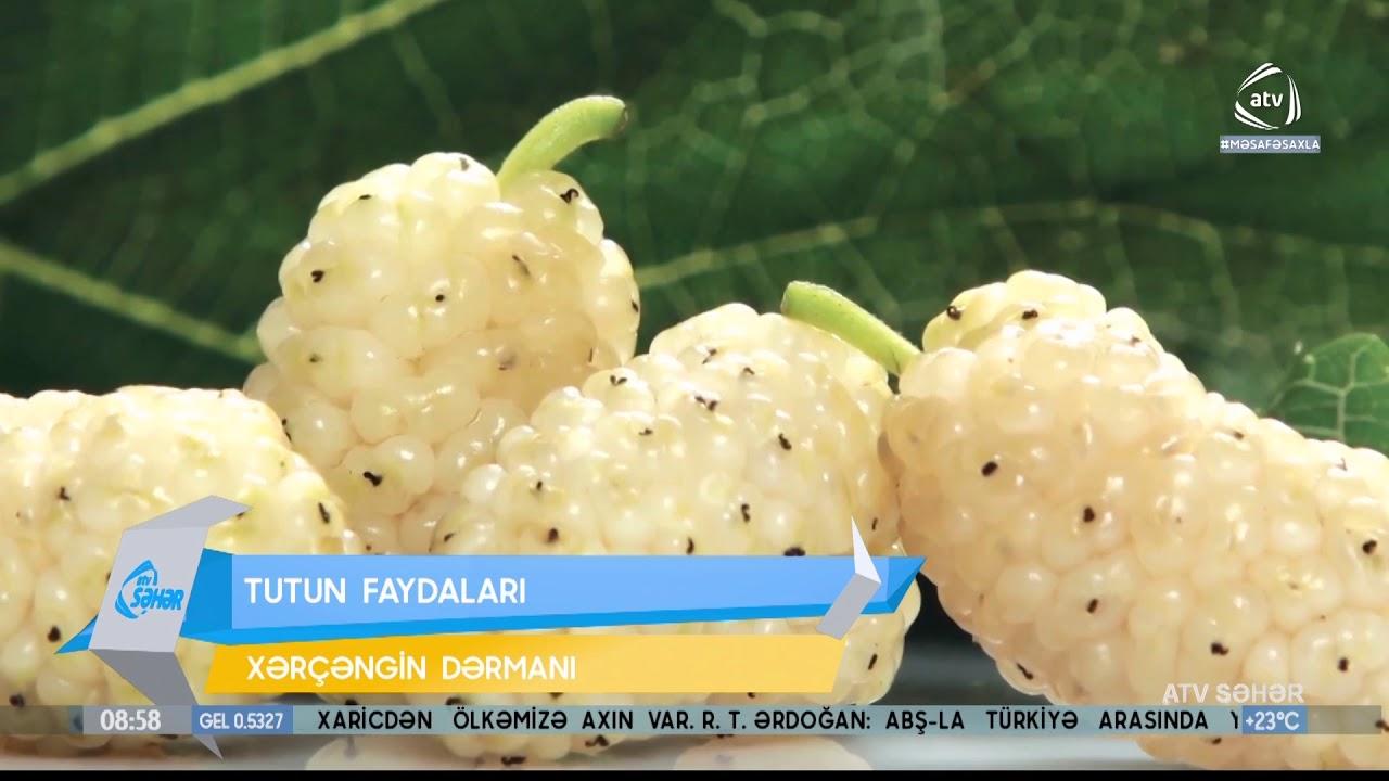 Download Tutun faydaları  (ATV Səhər)