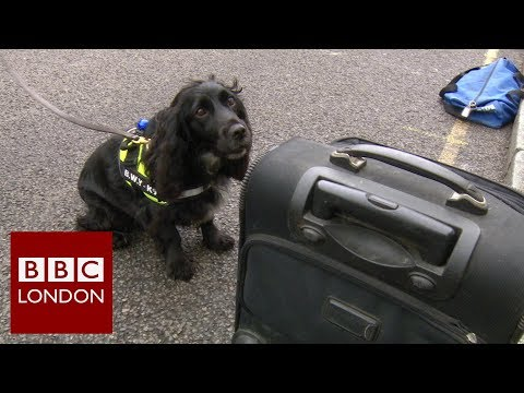 Illegal tobacco – BBC London News