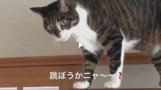 昼寝から目覚めた猫 まるお。綺麗になった水槽、その後。発酵式二酸化炭素も順調‼️ thumbnail