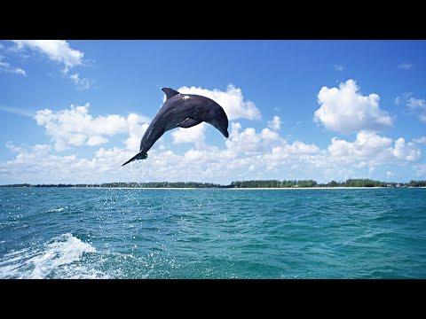 АНАПА ВИТЯЗЕВО Центральный пляж. Дельфины прямо НА берегу. ЧТО ОНИ ВЫТВОРЯЮТ.