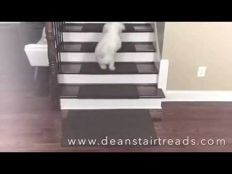 Dog Runs Stairs With Ease With Dean Carpet Stair Treads