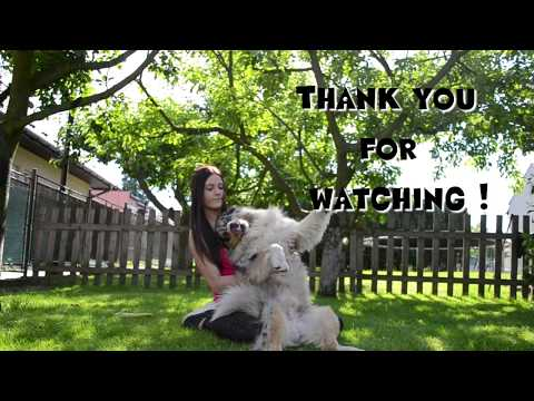 Summer Dog Trick Training 2017 ♡ | AKIM australian shepherd