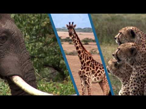 Effective Application of the Lacey Act and FCPA to Combat Wildlife Trafficking (French Subtitles)