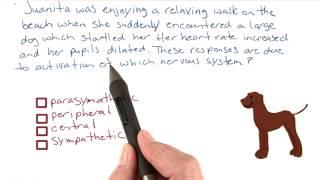Startling dog - Intro to Psychology