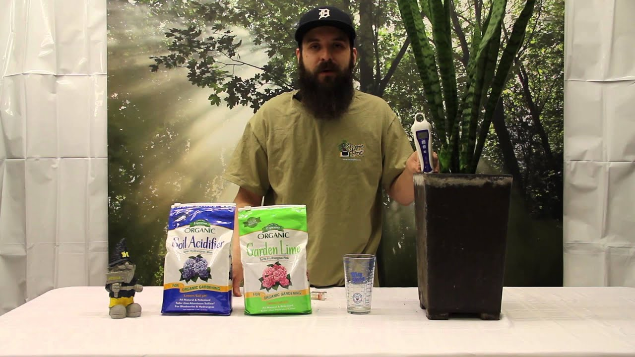 How to Test and Adjust the pH Level of a Soil Plant