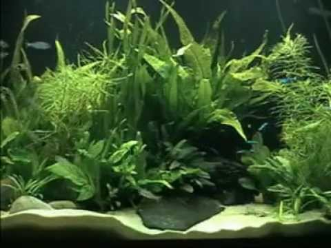 how to make a biosphere with fish