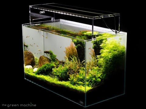 Aquascape Tutorial Guide by James Findley & The Green Machine- Sticks & Stones