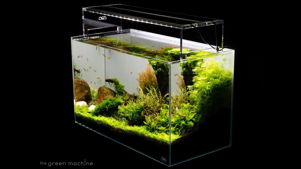 Aquascape Tutorial Guide By James Findley Amp The Green Machine Sticks Amp Stones Youtube