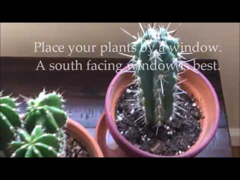 How To Care For Indoor Cactus Plants Caring For Cacti Youtube