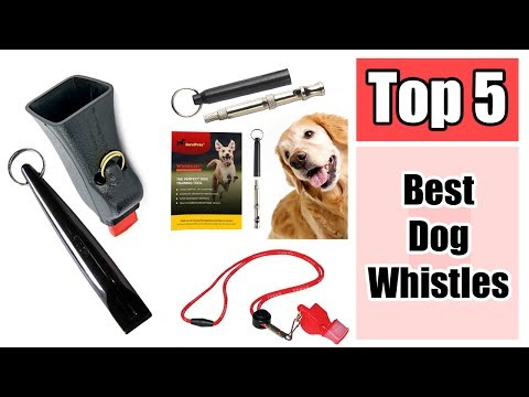 5-best-dog-whistles-to-curb-bad-dog-behavior-reviews-2017