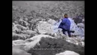 مودريتش كان يرعى الماعز حين حققت كرواتيا إنجازها التاريخي الوحيد في مونديال 1998.. فيديو وصور