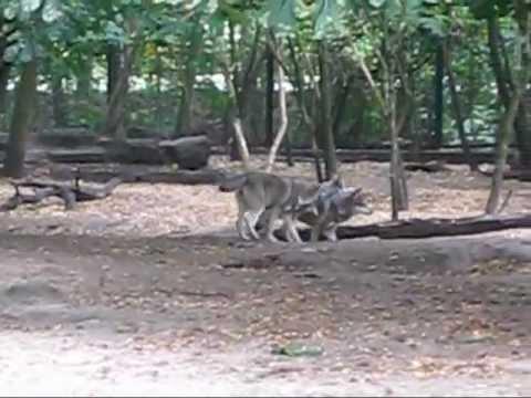 Germany - Berlin Pergamon museum & Tierpark