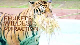 Tiger Kingdom - Phuket's Wildest Attraction