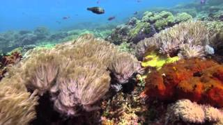Bali Dive Safari Island Tracking Paul Ranky Copyright VideoClip14