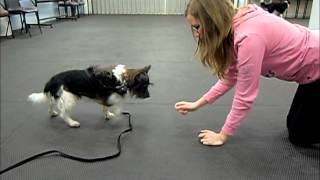 How To Train A Dog To Crawl