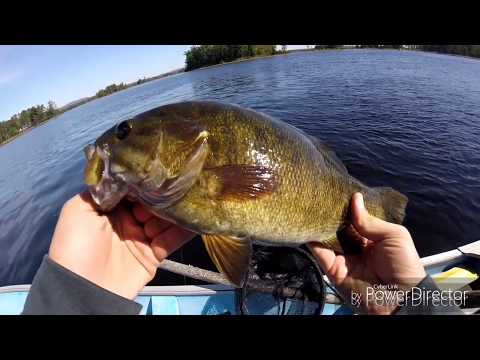 Catching HUGE Bass And Walleye--Ottawa River