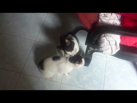 Mother Cat takes care of her son