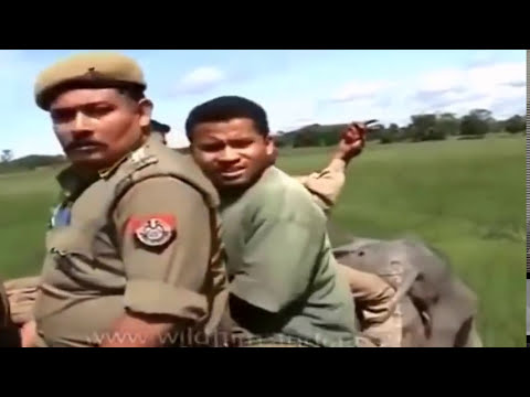 Elephant Vs Man .Angry elephants and many more
