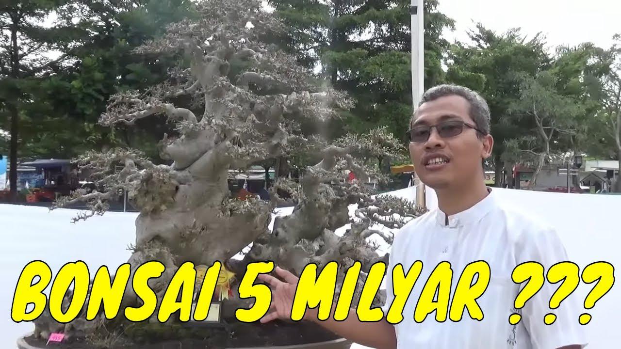 Bonsai Termahal Di Indonesia 5 Milyar Youtube