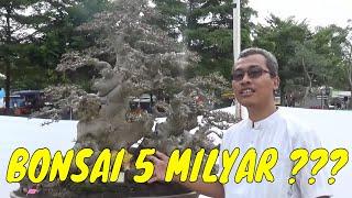 BONSAI TERMAHAL DI INDONESIA 5 MILYAR