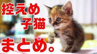 控えめに言って可愛すぎる子猫シリーズ完結記念まとめ