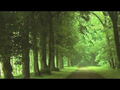 Sentimental piano theme [very relaxing piano]