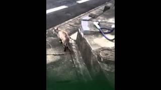 Poor Cat In Bad Condition