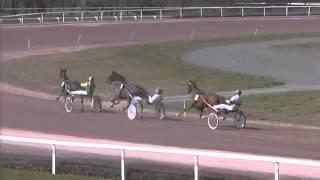 Cholet   -   Prix Societe Larribeau   -   20-03-2016   -   Douce Princesse