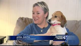 Kentucky Dog Owner Grateful For Care Lost Beagle Received In Pa.