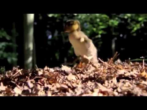 Rascom - per repera (Official Video HD) from YouTube · Duration:  3 minutes 56 seconds