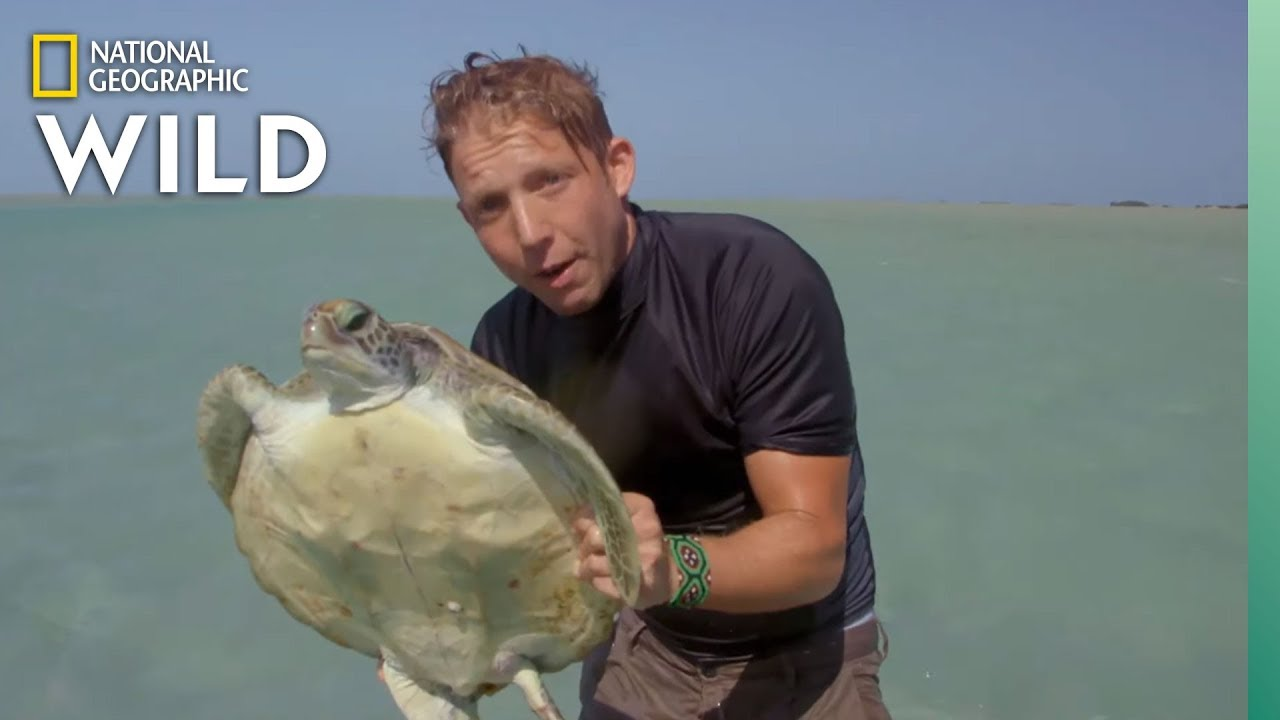 How Turtles Are Doing in Australia | Out There With Jack Randall