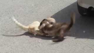 смешные животные видео Приколы с животными коты дерутся не на шутку