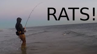 South Shore Long Island INFESTATION - Fishing For RATS & MICE - Stripers All Over!