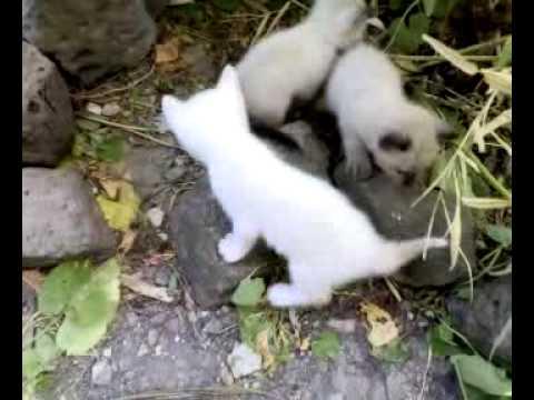 Gattini piccoli youtube for Piccoli piani colonica con foto