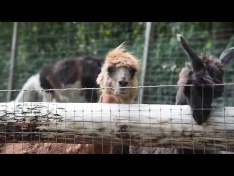 Hovatter's Wildlife Zoo