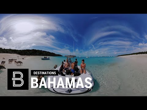 Swimming Pigs of the Bahamas in 360