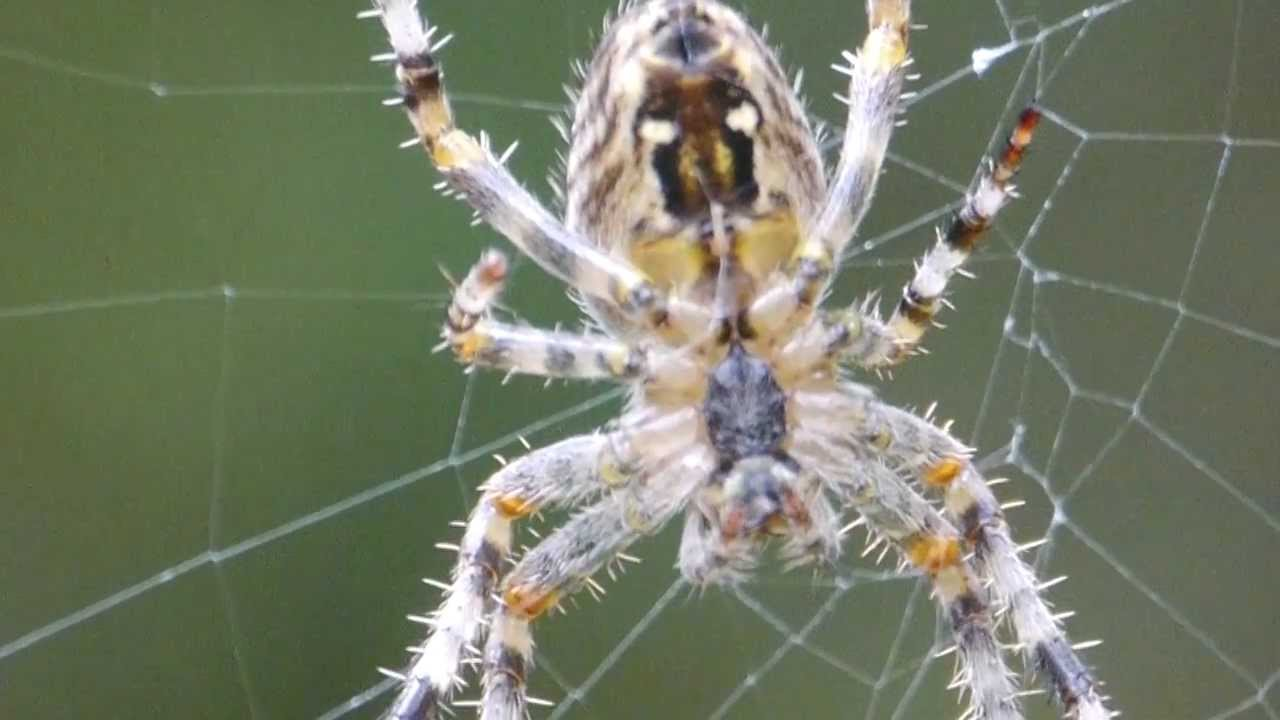 Spider Web Construction In Slow Motion Youtube