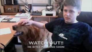 The Worlds Nastiest Golden Retriever; A Must See Dog Attack Video!!!