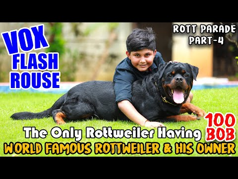 Vox Flash Rouse || 100BOB Rottweiler || Rott Parade : PART 4 || Top Leading Rottweilers in INDIA