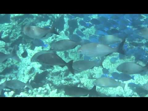 Snorkeling with Stingrays, Sharks & much more in Antigua with Captain Nick