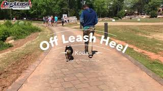 "6 Month Old English Bulldog ""Koda"" Before/After Video 