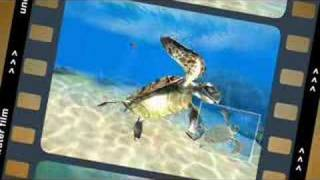 Sea Life Safari Official Gameplay Video