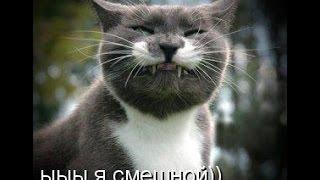 смешные кошки!!!   :)  FANNY CATS!!! Серия8.