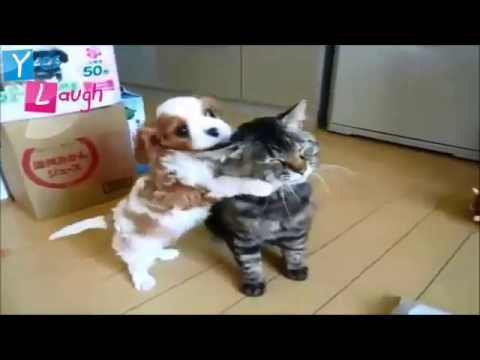 Funny videos 2015 - Funny Cat - Funny Dog  Try Not To Laugh Challenge!!