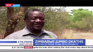 Zimbabwe Jumbo Death: Deaths of more than 30 elephants in Zimbabwe